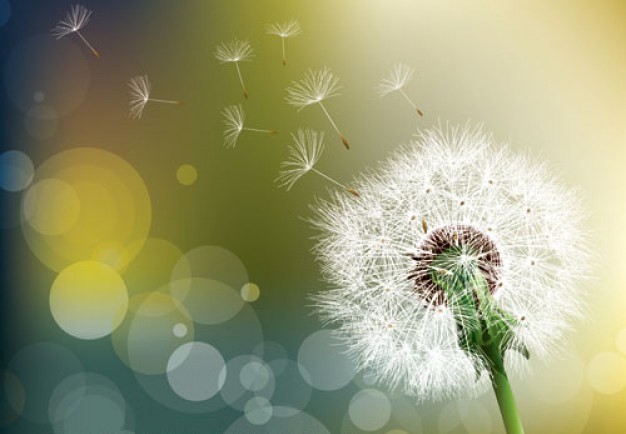 Printemps, allergies et huiles essentielles
