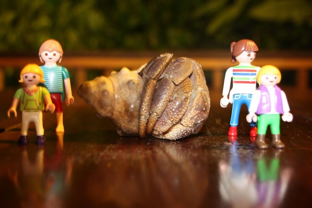 Voici la taille des bernard-l'hermites ici ! Elle fait pas le poids la famille Playmobil