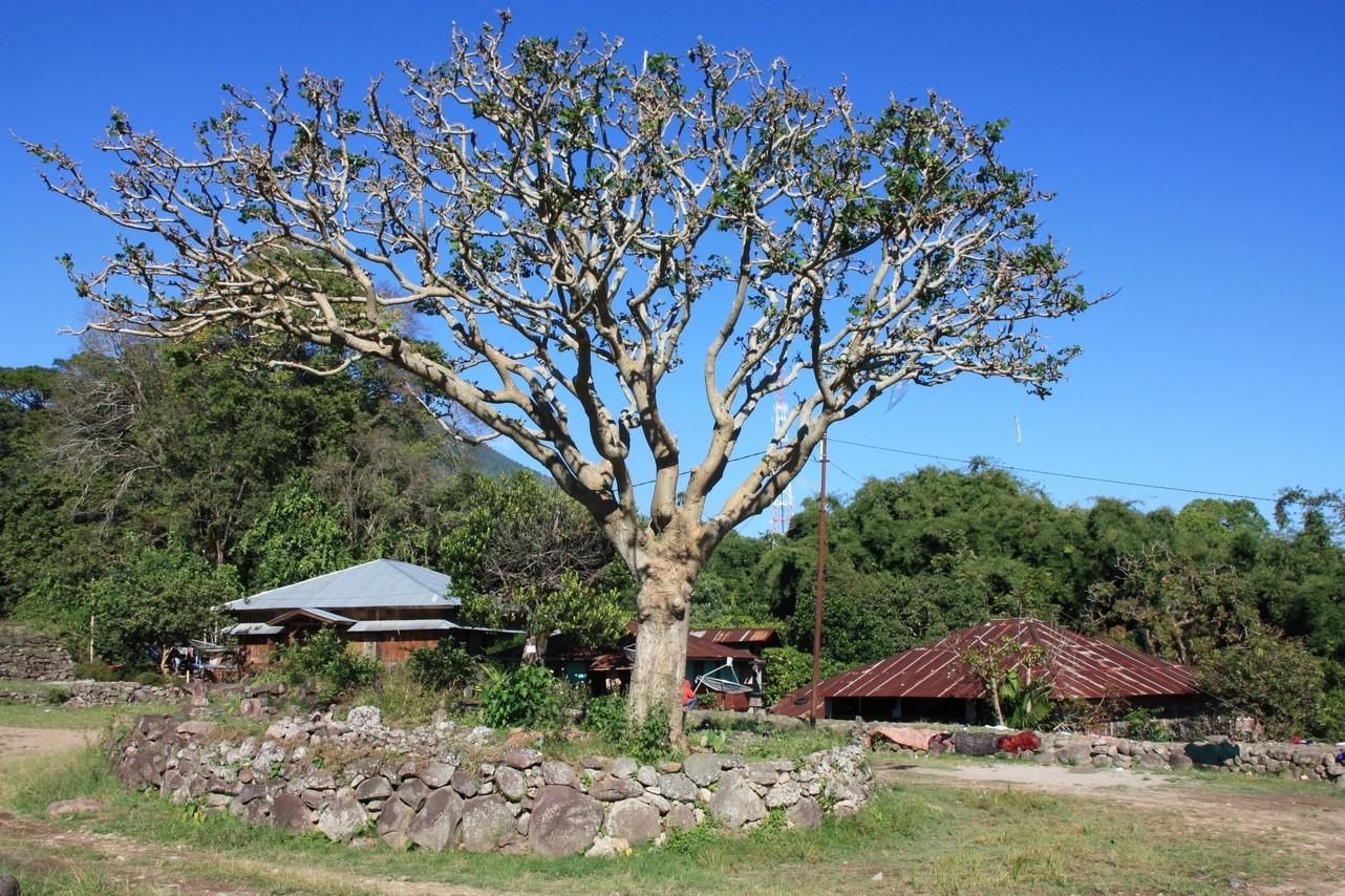 Ruteng : Pu'u Village