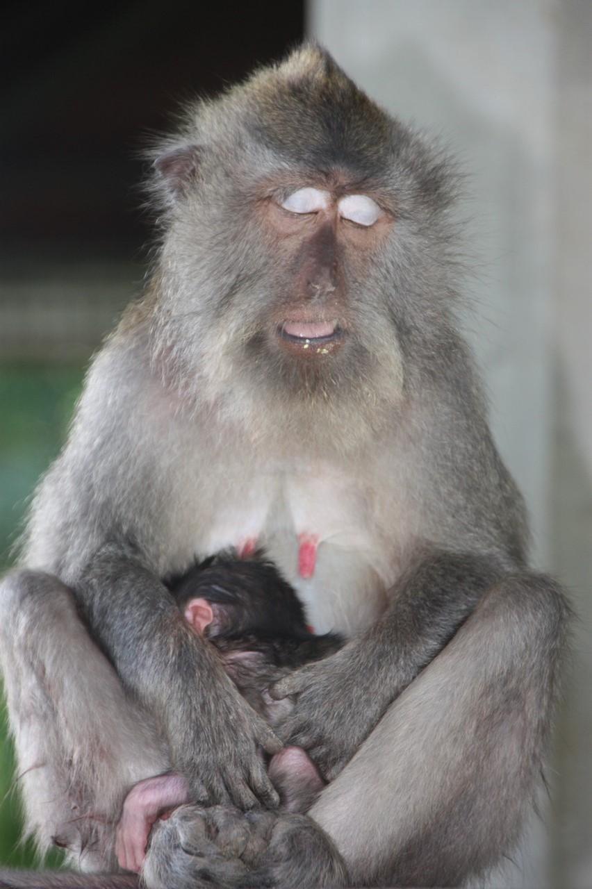 Autre maman épuisée avec son petit