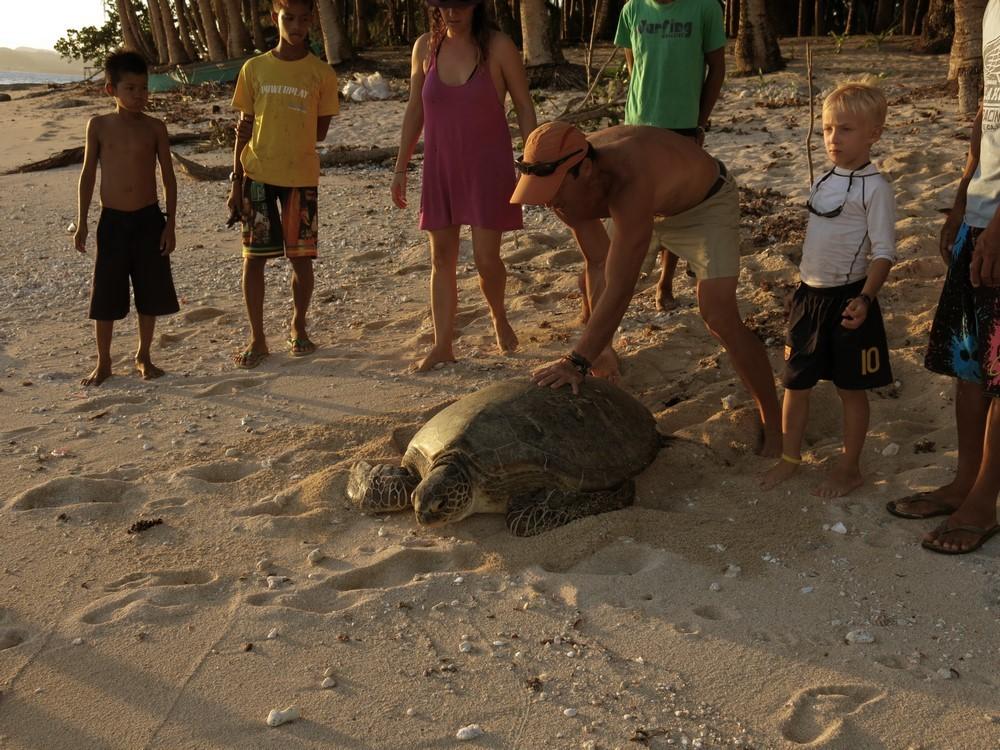 ... il a fallu beaucoup de bras pour motiver cette tortue à repartir !