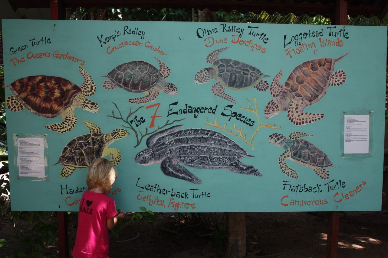 Centre de conservation des tortues