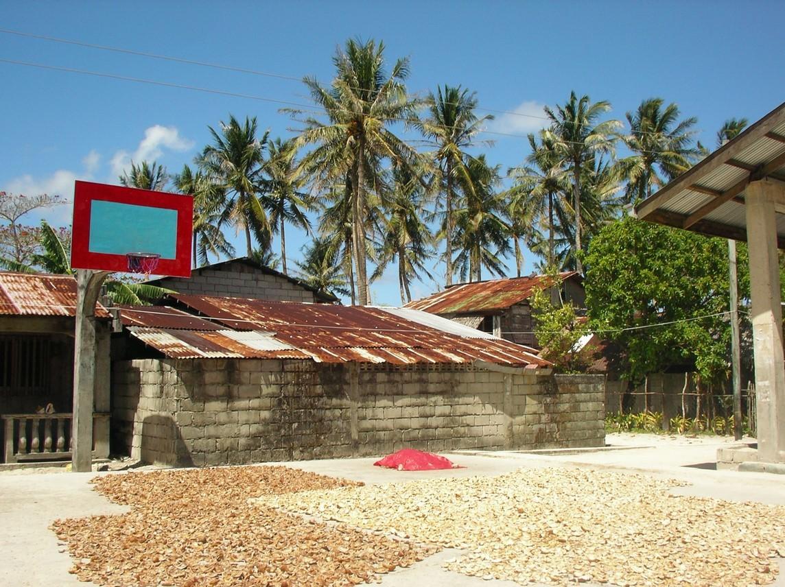 Noix de coco séchant au soleil