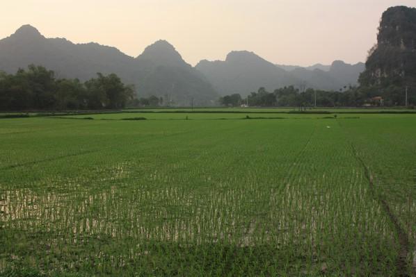 Coucher du soleil sur les rizières