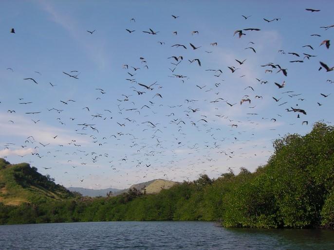 Sortie dans le Parc National des 17 îles