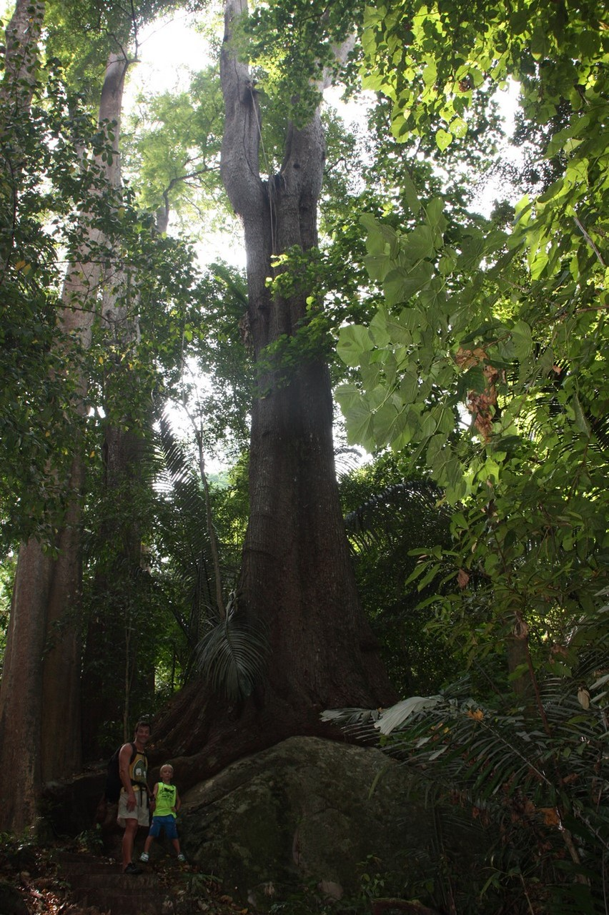 Randonnée dans la jungle