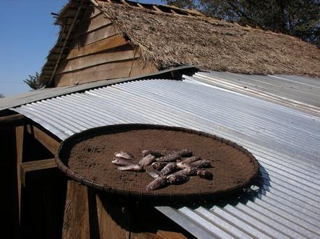 Poisson qui sèche sur les toits