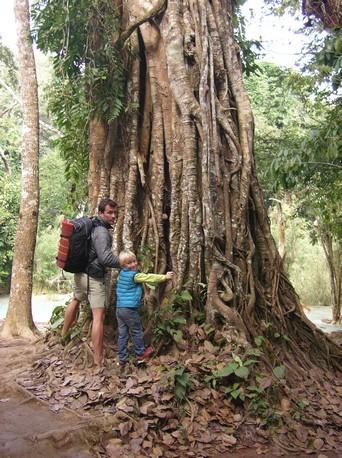 Besoin d'aide pour entourer cet arbre  !