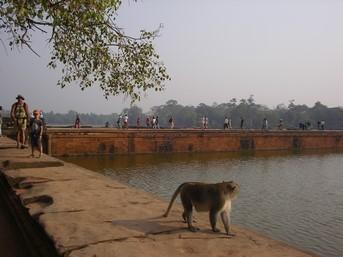 Mael et Dani accueillis par un macaque à Angkor Wat