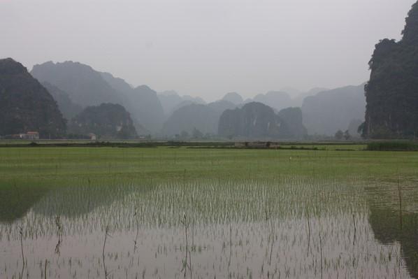 Retour dans les rizières