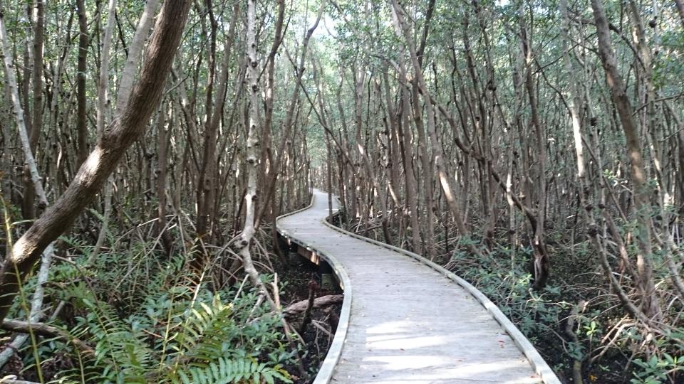 Man weiß nie wohin der Weg führt...Four Mile Cove