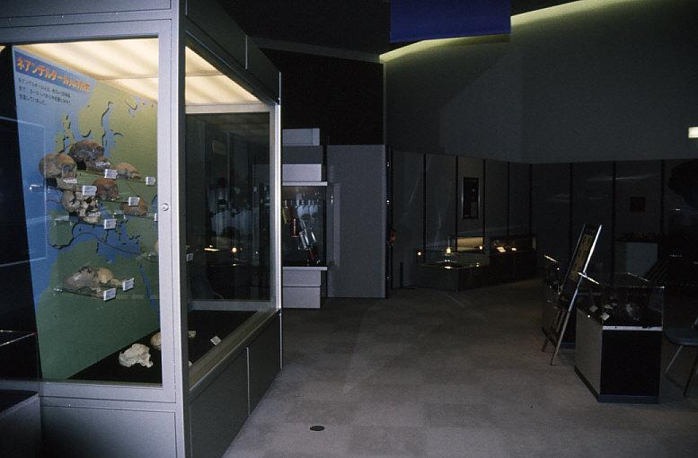 「ネアンデルタール人の世界」展示風景1