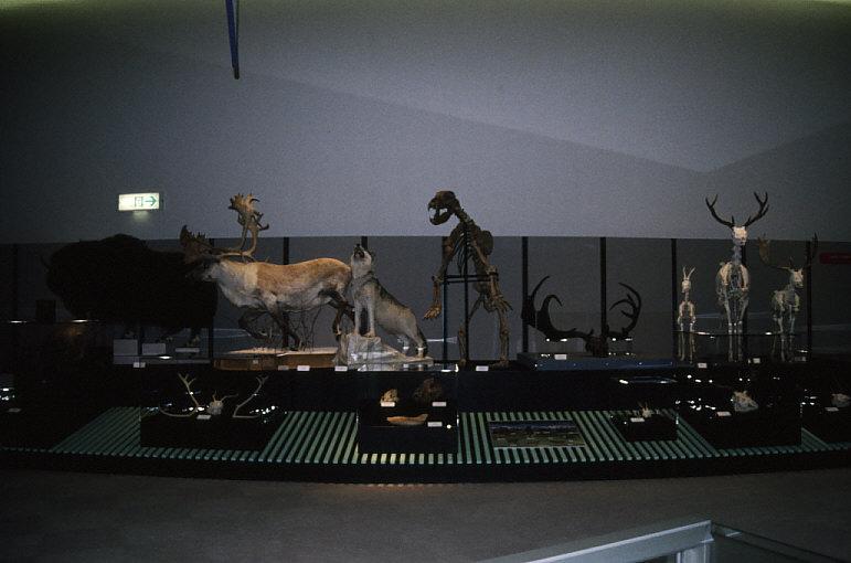 動物化石展示1