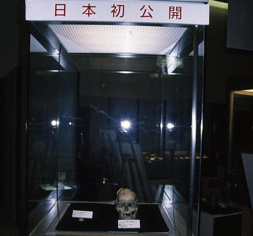 イタリア出土ネアンデルタール人とクロマニヨン人の実物標本