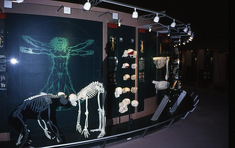 「3.ヒトの特徴」の展示風景