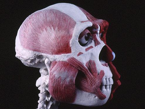 復顔過程1