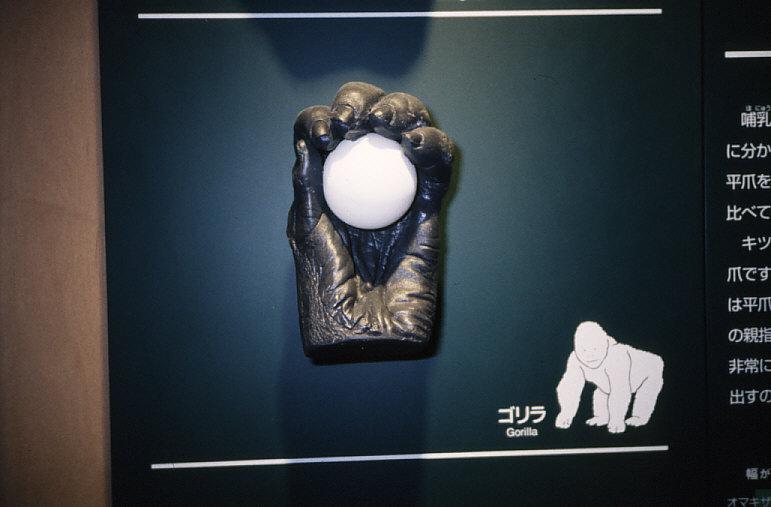平爪:ゴリラの手の模型