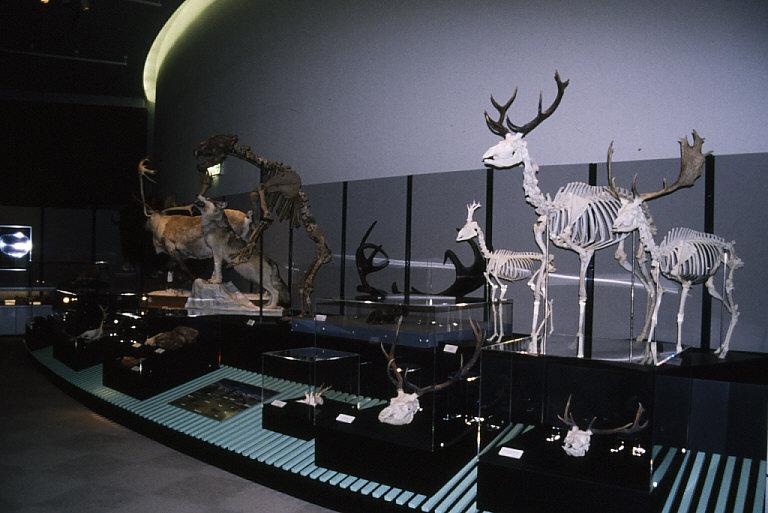 動物化石展示3