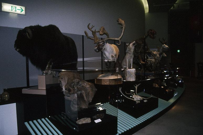 動物化石展示2