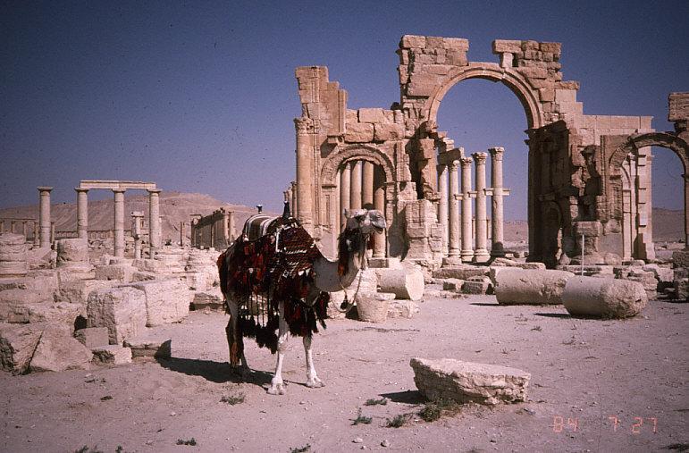 パルミラの列柱付き大通り入口とラクダ