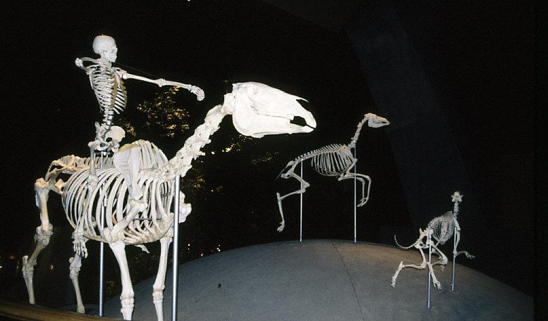 導入展示:動物とヒト