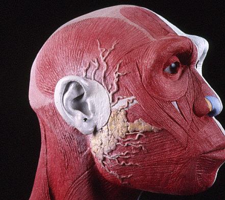 復顔過程3