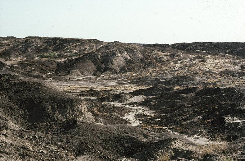 古人類学実習で表面採集