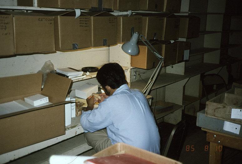 骨学研究室で子供の古病理を研究中の私