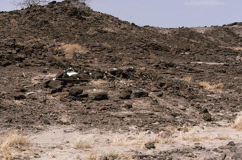 古人類学実習で遺跡の平面図作成