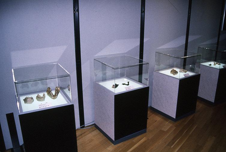 化石霊長類レプリカ:「霊長類への道」展示