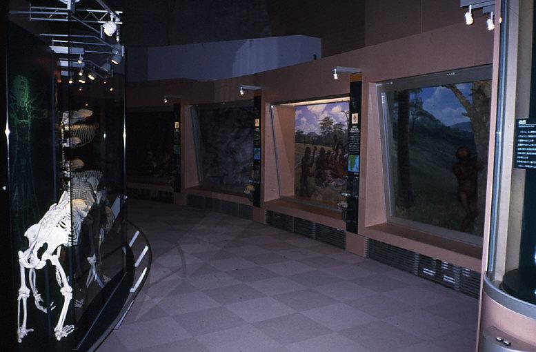 「2.ヒトの起源と進化」展示風景
