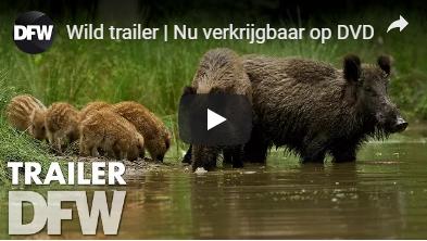 Wild op de Veluwe