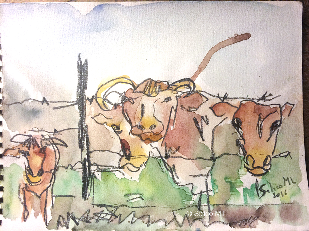 """""""Troupeau de vaches"""""""