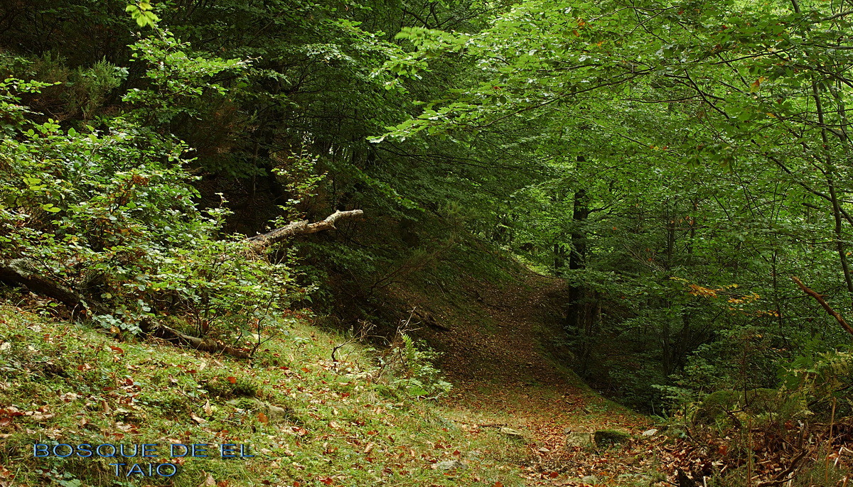 Bosque del Taio