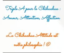 Les slogans de notre site d'élevage chihuahua