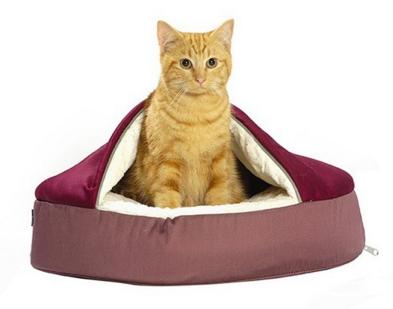 animalerie en ligne chien et chat levage de chihuahua. Black Bedroom Furniture Sets. Home Design Ideas