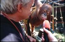 Sumatra-Orang-Utan (Foto Roland Schmid)
