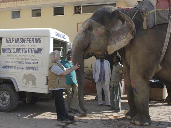 Elefantenreportage, Jaipur, India