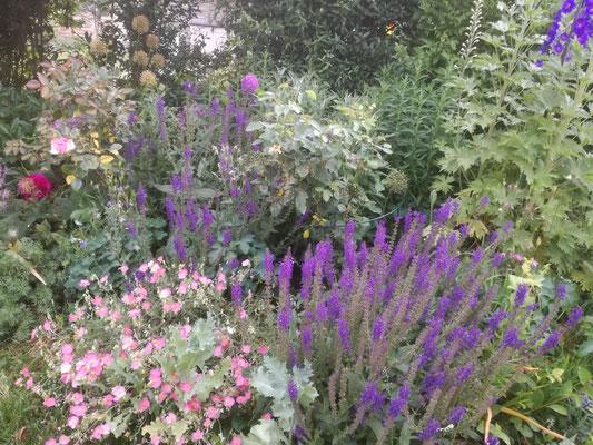Blütenvielfalt, insektenfreundlich, durch winterharte Stauden