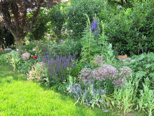 Frühjahrs-Blüher mit langer Wirkung der Blütenstände.