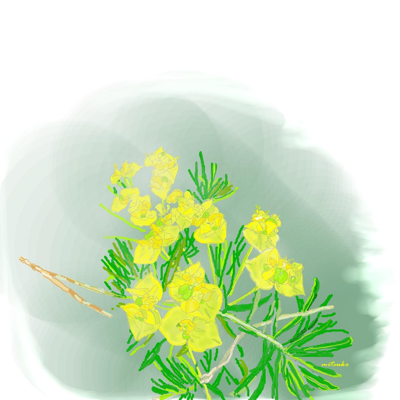 スイスアルプスの花2