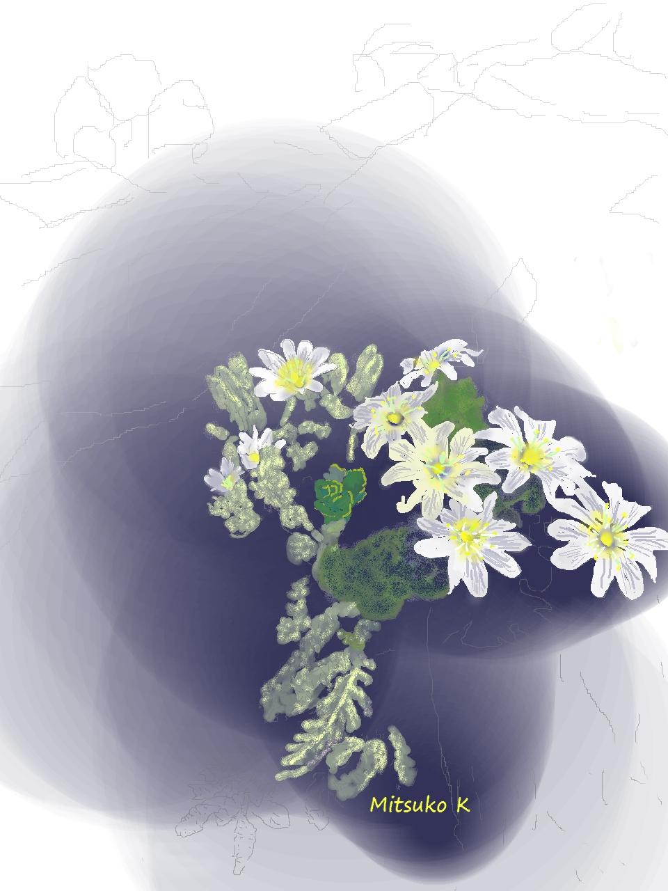 スイスアルプスの花3