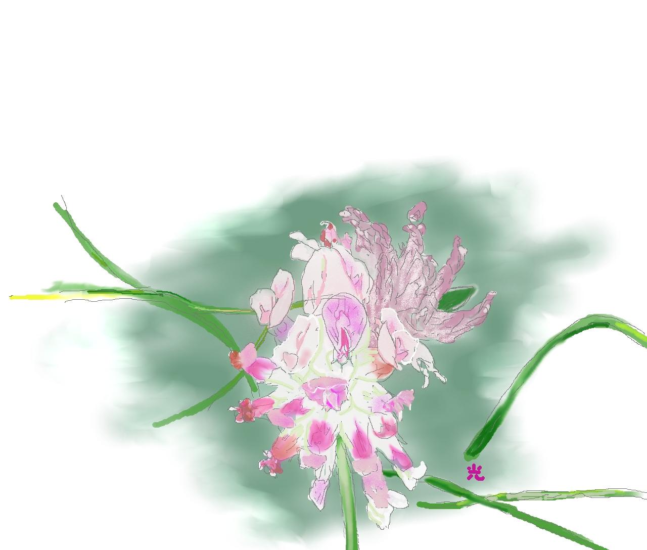 スイスアルプスの花1