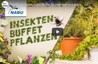 Insekten-Buffet pflanzen_ws.jpg