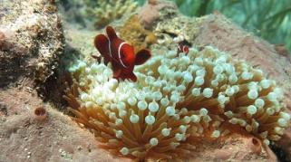 Wenn die Meere sauer werden - Eine Gefahr für die Artenvielfalt 01 ARTE2018.png