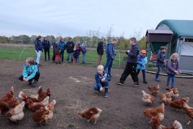 NAJU_2019-11-08 Tierhaltung im Ökolandbau_DSCF9569 Freilandhaltung von Hühnern; Patrick Butsch_ws.jpg