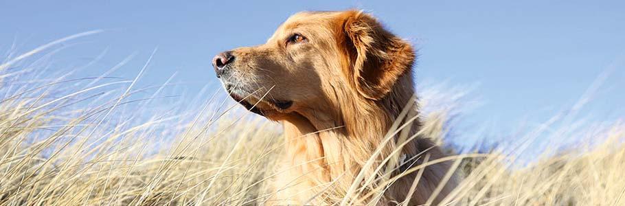 Kontakt zu Kuddels Hundekekse