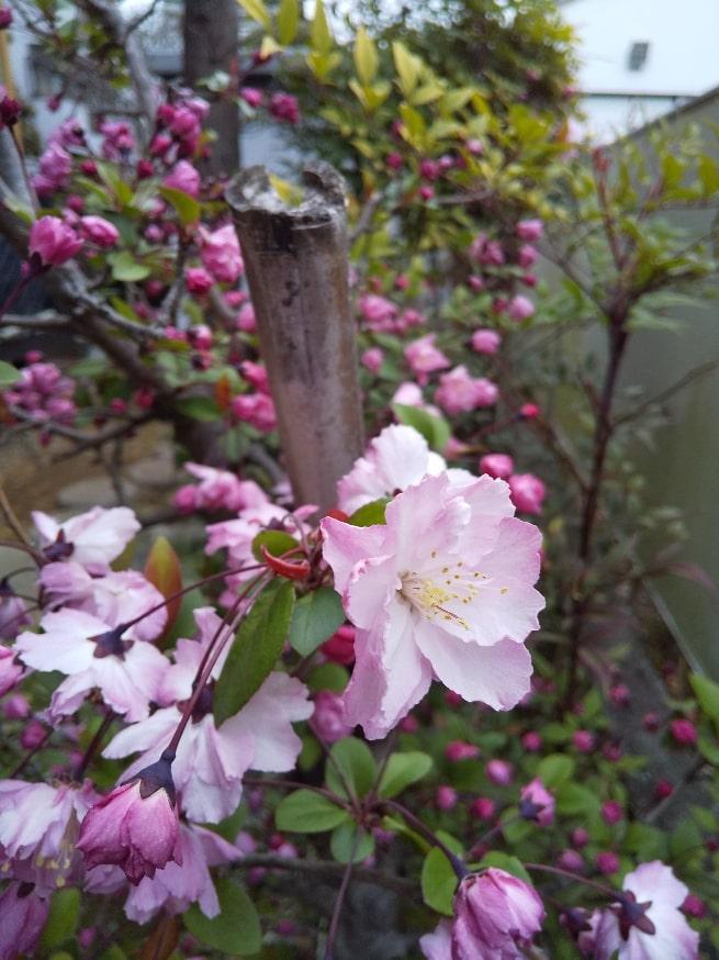 庭の花の名前