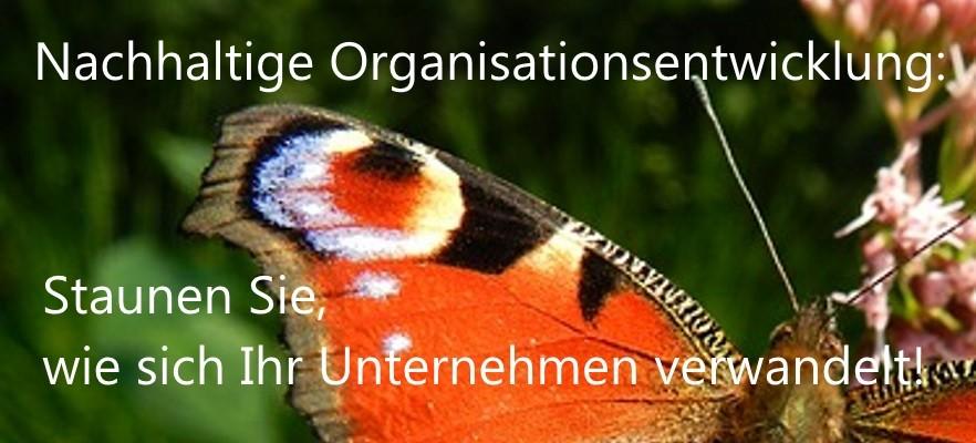Nachhaltige Organisationsentwicklung: Staunen Sie, wie sich Ihr Unternehmen verwandelt!