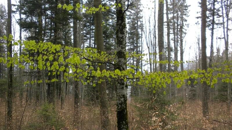überall herrscht zartes Grün